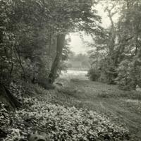 Woodland Glade, Newburgh Priory - HLS05884
