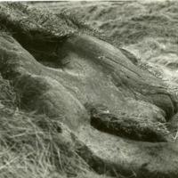 Medieval Track at Blackstone Edge - DTA00371