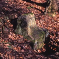 Ancient Stone – STB00103
