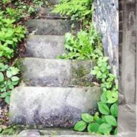 http://www.penninehorizons.org/Omeka_photos/HBW00558.jpg