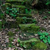 http://www.penninehorizons.org/Omeka_photos/HBW00668.jpg