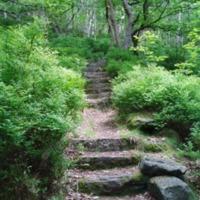 http://www.penninehorizons.org/Omeka_photos/HBW00300.jpg