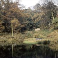 Jowler Dam in Wade Wood - EFM00198