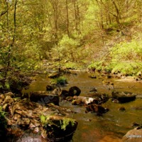 The River in Hardcastle Crags - NAO00198